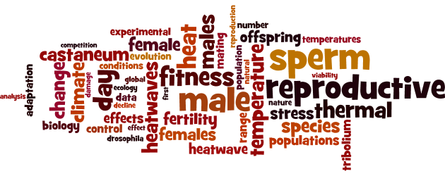 wordle-website